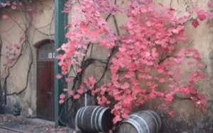 kaapzicht wine estate venue hire